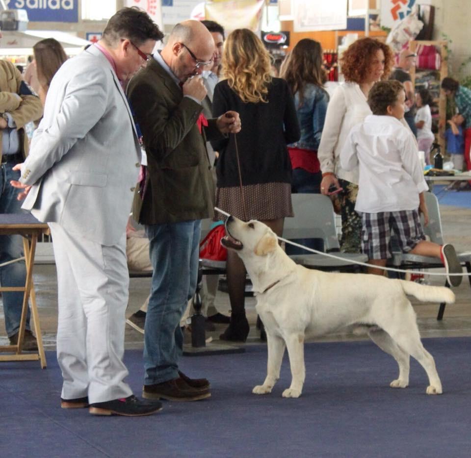 International Dog Show Jerez 2014